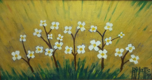 24 White Flowers © Danny Ricketts